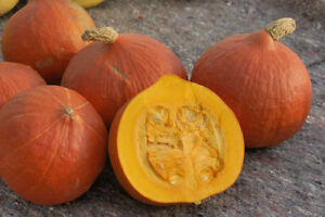 Pumpkin SOLOR-Pumpkin Seeds-VERY SWEET-SIMILAR TO POTIMARRON -8 FRESH SEEDS.