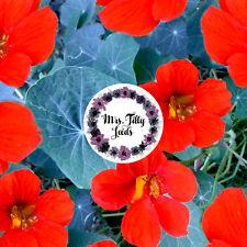 Kapuzinerkresse EMPRESS OF INDIA 20 Samen Kressesamen essbare Blüten historisch