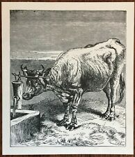 1880s Victorian Era Book Drawing COW AT THE WATER WELL