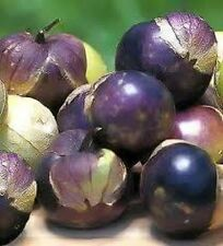 50 PURPLE TOMATILLO Physalis Ixoxcarpa Vegetable Seeds + Free Gift & Comb S/H