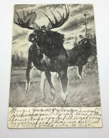 "Antique Postcard ""Wild Moose Of Northern Minn. "" Posted 1909 / Rare"