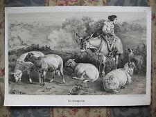 Lithographie animalière mouton animaux de la ferme vers 1850 22 x 15 cm A. Adam
