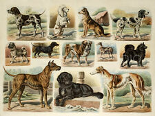 Dogs with pedigree Vintage Pet Poster Giclee Canvas Print 24x18