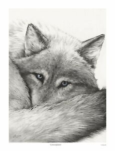 Contemplation,  Open Edition Wolf Print, Wolves