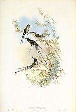 "1990 Vintage HUMMINGBIRD #135 /""ANNA/'S CALYPTE/"" GORGEOUS GOULD Art Lithograph"