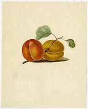Antique Drawing-FRUIT-PLUM-BRANCH-Baeke-1826