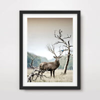 STAG DEER ANIMAL WILDLIFE PHOTOGRAPHY ART PRINT Poster Horns Antler Wall Picture