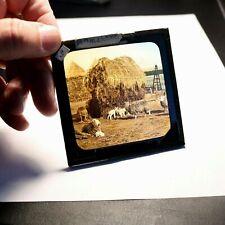 Farmyard antique photo magic lantern slide #8189