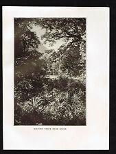 Milford Track Bush Scene, New Zealand - 1913 Print
