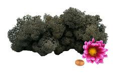 Muwse Islandmoos Köpfe V 4-12cm 25g Dunkel Grau handgereinigt Moos Deko Floristi