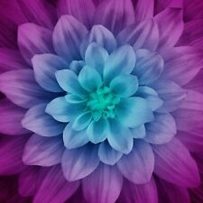 "Dream Big Flower Panel-Aurora-Hoffman Fabrics-Approximately 43"" x 43""-Digital"