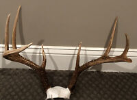 Near Perfectly SYMMETRICAL 8 Point Whitetail Buck Deer Rack Shed Antlers Craft