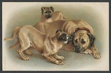 c.1907-10 Postcard Mastiff Dog And Puppies Albrecht & Meister, Berlin No. 562