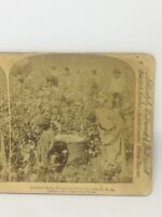 African-Americans Cotton Is King Plantation Scene Georgia, USA Stereoview