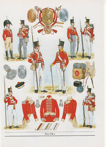 Vintage British Uniform Print 1811 Infantry Of The Line Battle Of Albuhera