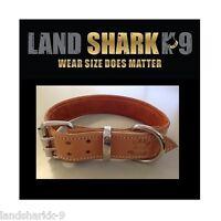 Medium Natural Leather Dog Collar & Rust Suede Padded Inner Lining & Nickel