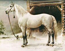 White Horse by Dutch  Otto Eerelman. Canvas Animals.  11x14 Print