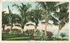 Miami Fl – A Corner of the Park – udb – 1906