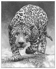 Wildlife Jaguar wall art jag picture animal panther posters sketch drawing print