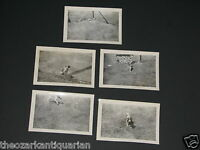 Dog beagle type in Independence Kansas 1940's SET of 5 photographs