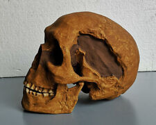 MOULAGE FOSSILE crane Sapiens Homme Combe Capelle skull hominid reproduction