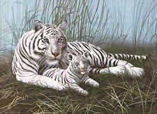Malen nach Zahlen PJL-22 Weiße Tiger