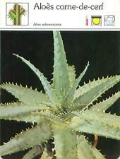 FICHE CARD Aloès Corne de Cerf Liliacées Aloe vera flowering succulent Plant 90s