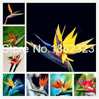 100% Real Strelitzia Seeds Plants Reginae Flower Potted Flowers Bird Of Indoor