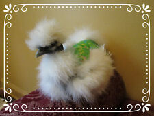 4 SILKIE CHICKEN SADDLE HEN APRON FEATHER PROTECTION BACKYARD POULTRY
