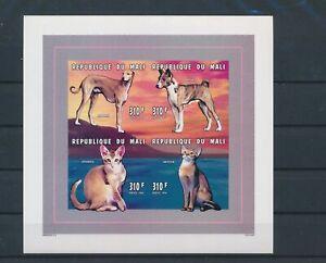 LO04317 Mali pets animals cats imperf sheet MNH