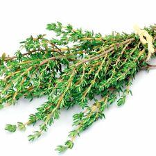 1000+ Common Thyme Organic Seeds Culinary Herb Perennial Heirloom Garden