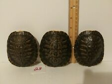 """(3) 3 3/4"""" Red Ear Slider Turtle Shell Taxidermy Arts Crafts Oddity"""