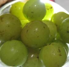 25 Sun Dried AMLA Miracle Fruit Indian Gooseberry  - Herbal tea Remedy