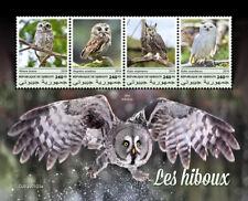 Djibouti 2019   fauna  owls    S201903