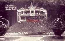 """PEACOCK"" EDEN SPRINGS ZOO, HOUSE OF DAVID, BENTON HARBOR, MI 1964"