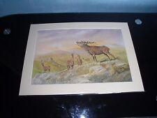 Large Mounted Stag / Deer Print