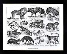 1874 Bilder Atlas Zoology Print - Felines - Lion Tiger Jaguar Leopard Wildcats