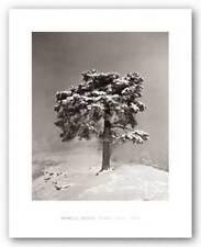 Piera Cava, 1940 Marcel Bovis Art Print 14x12
