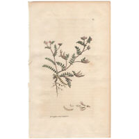Sowerby antique 1st ed 1795 hand-colored engraving botanical Pl 369 Bird's-foot