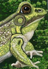 ACEO ATC Original Trading Card Frog Pond Wildlife Art -Carla Smale