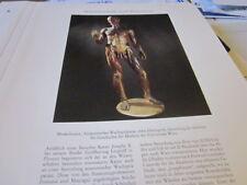 Wien Archiv 5 5020 Muskelmann Anatomisches Wachspräparat 1785