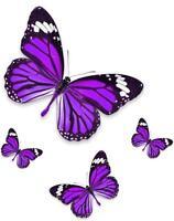 Set 4x autocollant sticker voiture moto papillon violet