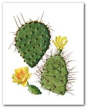 CACTUS Flower Stampa, botanico Pianta grassa ART, 8 x 10 pollici, senza cornice