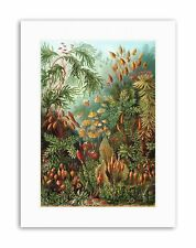 ERNST HAECKEL SEA PLANT GERMANY Poster Vintage Nature Biology Canvas art Prints
