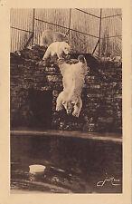 Plongeon de Marius Jardin Zoologique QUEBEC QC 1930-50 Édit. d'Art Jackie XS 4