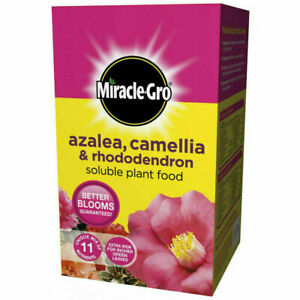 Azalea Camellia Rhododendron Plant Soluble Feed Miracle Gro 1kg Multi Purpose
