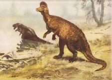 "ALBERTA, CANADA Dinosaur  CORYTHOSAURUS Color Print By Z Burian 1963 VF 9x13"""