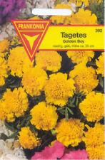 Ein- & Zweijährige Pflanzen-Samen Blühende Tagetes