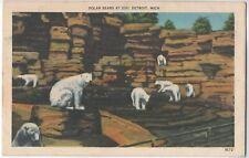 Vintage 1930s 1940s- Polar Bears at Zoo - Detroit, Michigan