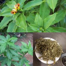 200g(7oz) Insulin plant Powder and cut&sifted| Sugar plant| Natural Herbs For Di